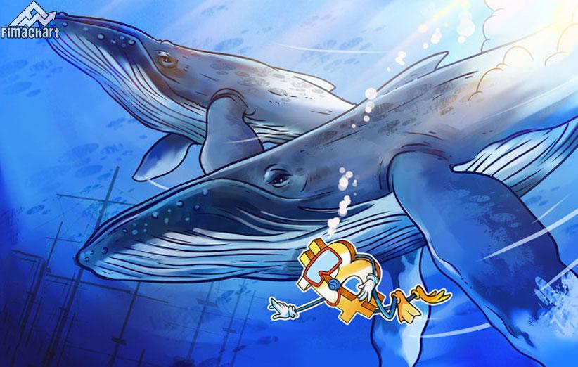 نهنگ-بیت-کوین